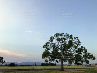 木の写真・画像素材[2146972]