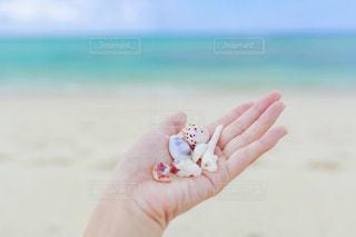 ビーチで貝殻を持っている女性の手の写真・画像素材[753994]