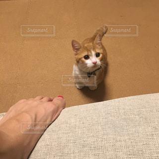 猫を持っている人の写真・画像素材[754110]