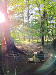 木に座っている犬の写真・画像素材[754684]