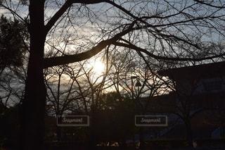 大きな木の写真・画像素材[754891]