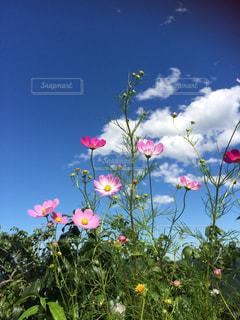 色とりどりの花のグループ - No.754908