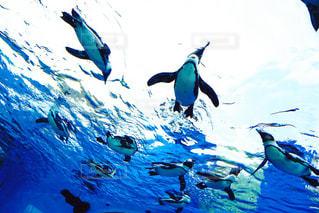 空飛ぶペンギンたちの写真・画像素材[755006]