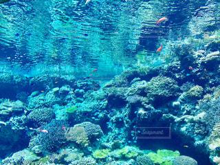 水族館の写真・画像素材[758616]