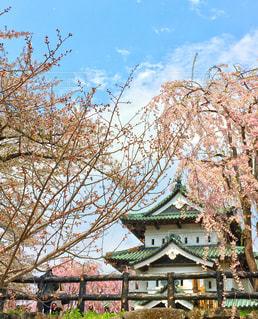 城と桜の写真・画像素材[1092553]