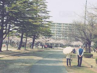 公園を歩く夫婦の写真・画像素材[1199949]