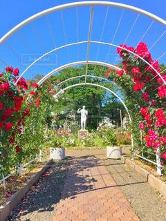 庭の赤い花の写真・画像素材[1221568]