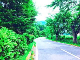 道の端に木のパス - No.755756