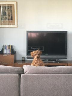リビング ルームに座っている犬 - No.758216