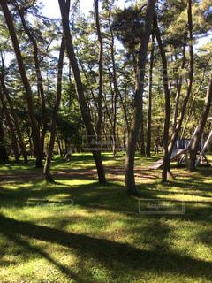 公園の木 - No.759980