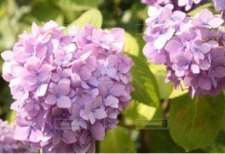 近くの花のアップの写真・画像素材[757203]