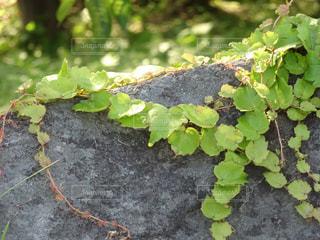 同居する樹木の写真・画像素材[766787]