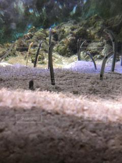 水族館の癒しスポットの写真・画像素材[766743]
