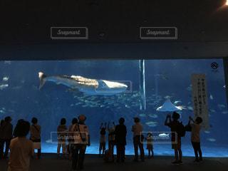 ジンベイザメ優雅に泳ぐの写真・画像素材[766745]