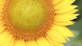 近くの花のアップの写真・画像素材[757983]