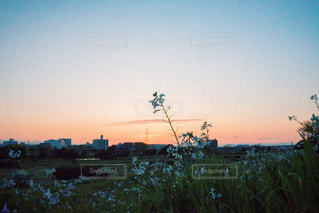 多摩川夕暮れの写真・画像素材[758165]