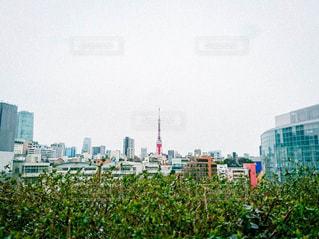東京タワーの写真・画像素材[759205]