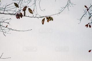 枝の上に座って鳥の群れの写真・画像素材[807972]