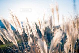 近くにいくつかの草のアップの写真・画像素材[807992]