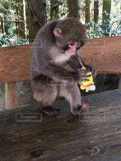 猿の写真・画像素材[22538]