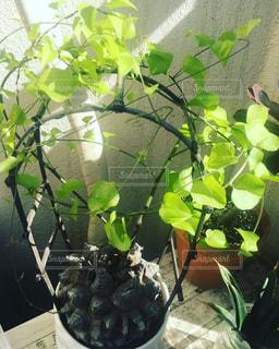 近くの植物のアップの写真・画像素材[758429]