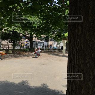 昼下がりの公園、眩しい日差しの中での写真・画像素材[758494]