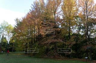 森の大きな木の写真・画像素材[758449]