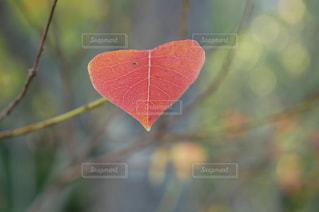 近くの木のアップの写真・画像素材[758452]