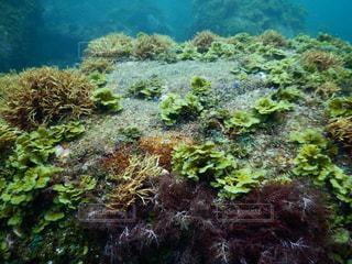 森の水中ビューの写真・画像素材[759532]