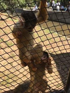 猿の写真・画像素材[22699]