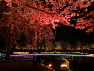 夜ライトアップ橋の写真・画像素材[759058]