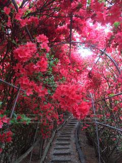 花のアーチの写真・画像素材[763724]