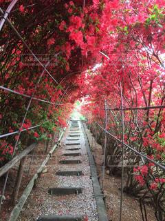 花のアーチの写真・画像素材[763725]