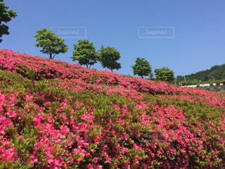 緑の葉とピンクの花 - No.800844