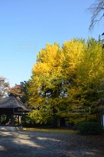 秋の景色 - No.859176