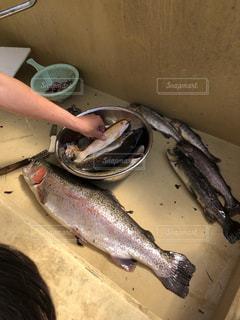 釣りの写真・画像素材[1150146]