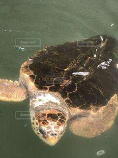 ウミガメの写真・画像素材[2112381]