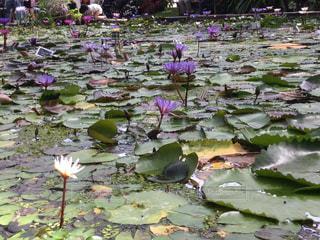 近くに池のアップの写真・画像素材[759613]