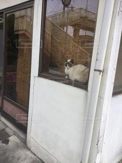 ドアの横に座っている猫 - No.759667