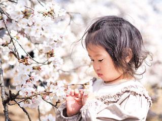 桜を見つめる少女の写真・画像素材[1942091]