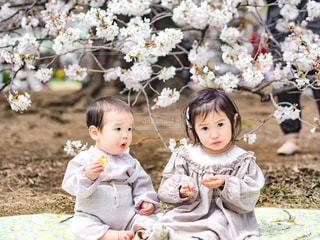 桜と小さなふたりの写真・画像素材[1942215]
