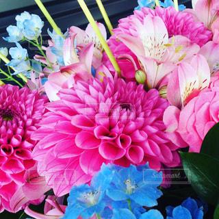 ピンクのダリアのフラワーアレンジメントの写真・画像素材[759903]