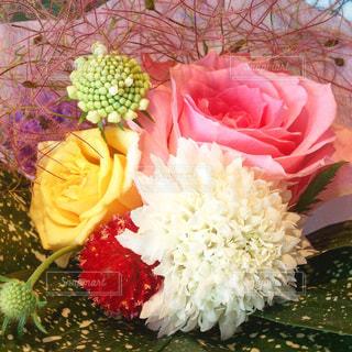 ピンクの薔薇のミニブーケの写真・画像素材[759907]