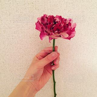 花を持っている手の写真・画像素材[977895]