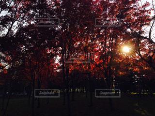 近くの木のアップの写真・画像素材[760187]