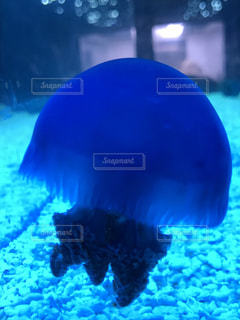 クラゲの写真・画像素材[769651]