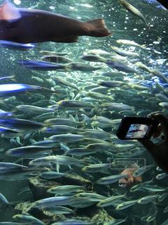水の中の魚の群れを撮る人の写真・画像素材[782717]