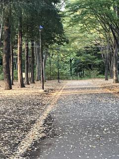 木の写真・画像素材[846351]