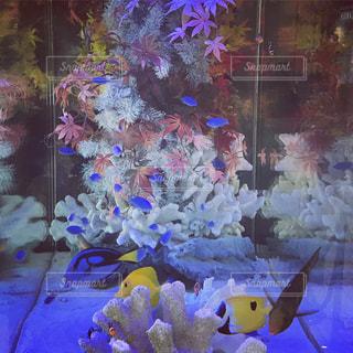魚の写真・画像素材[867718]