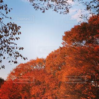 近くの木のアップの写真・画像素材[896215]